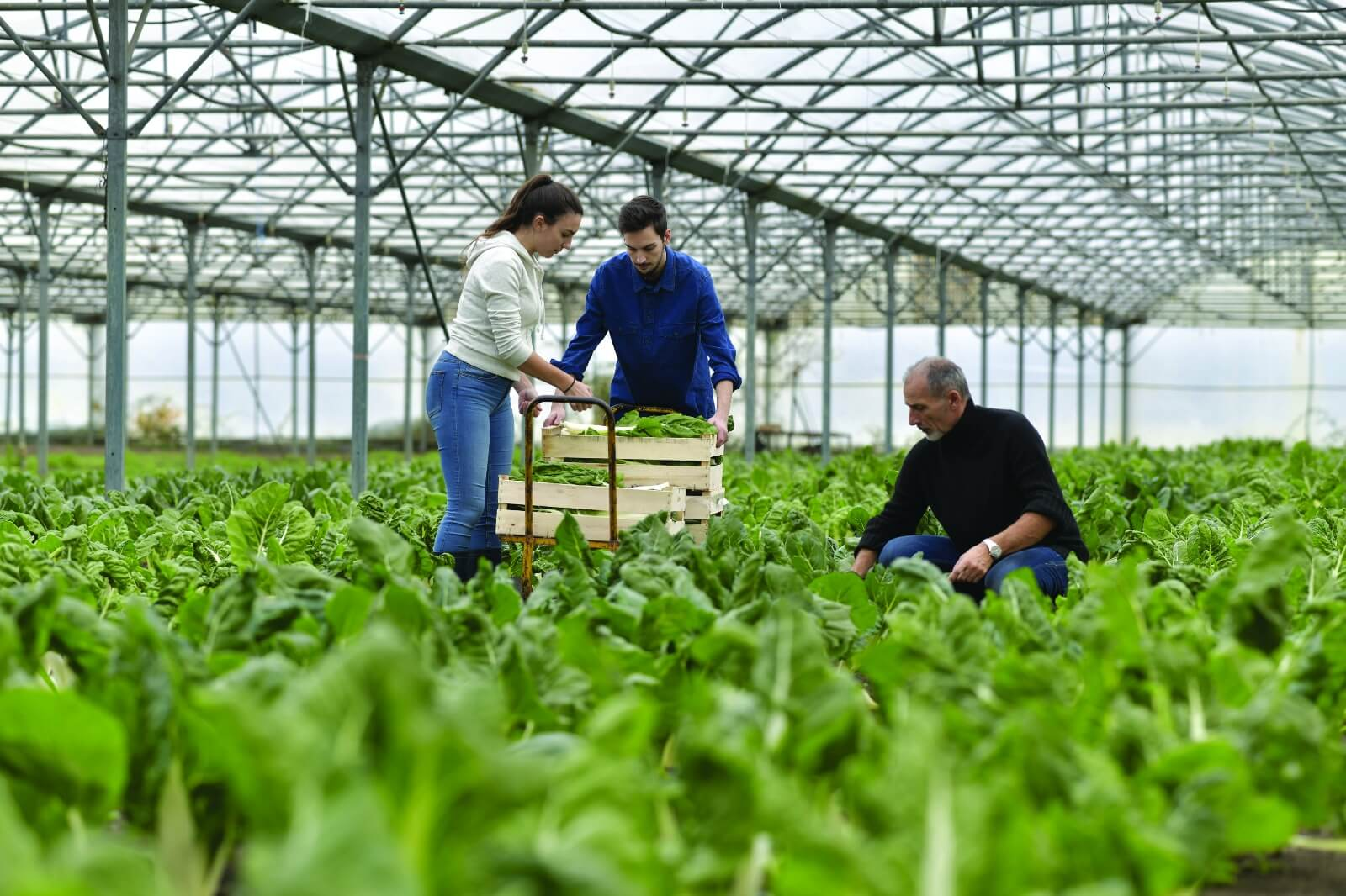 cp-agriculture (1)