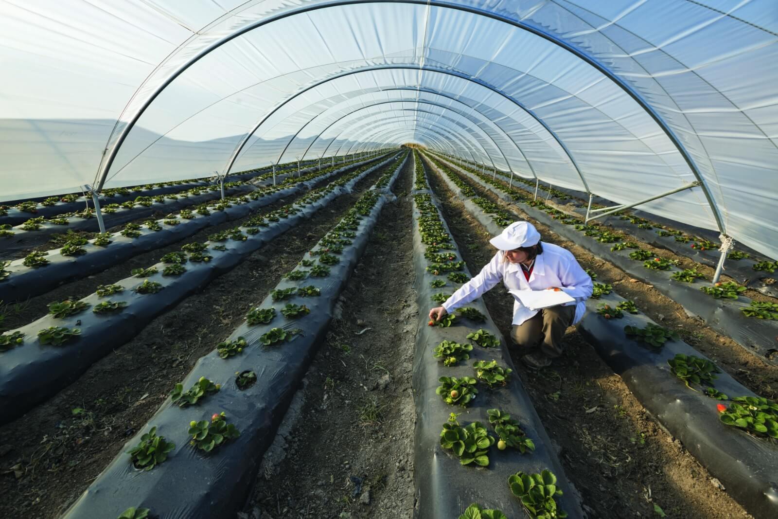 L'agriculture face au défi de la transition énergétique : les solutions Hellio